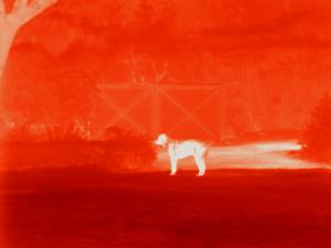 Hund im Hof